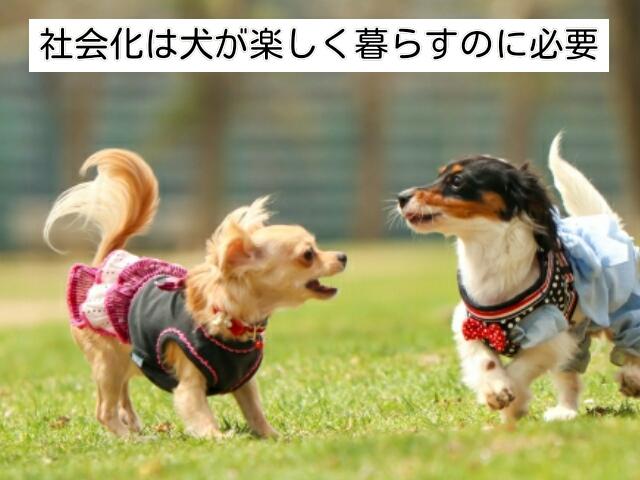 社会化することで犬が楽しい日々を送れるようになる