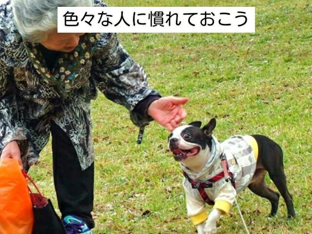 人との社会化は犬が幸せにくらすために大切