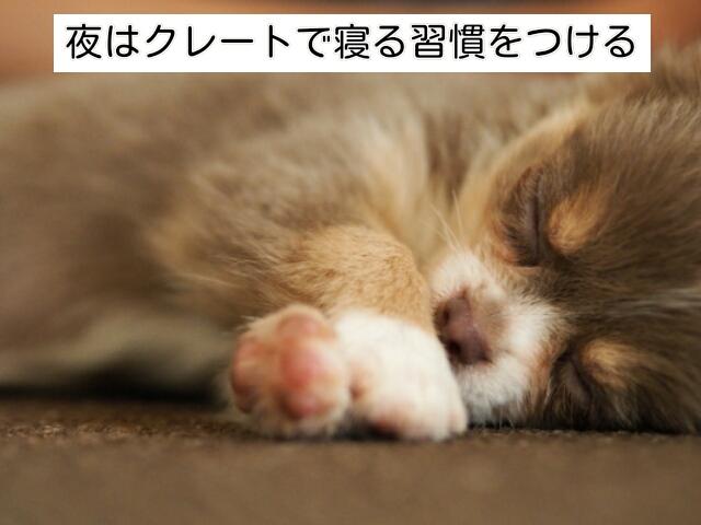 夜は初日からクレートで寝る習慣をつけましょう