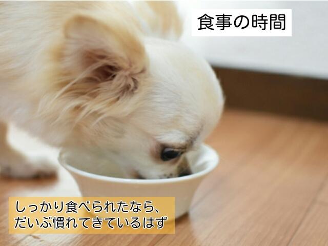 初日は子犬にいつもより少なめの食事を与えてみる