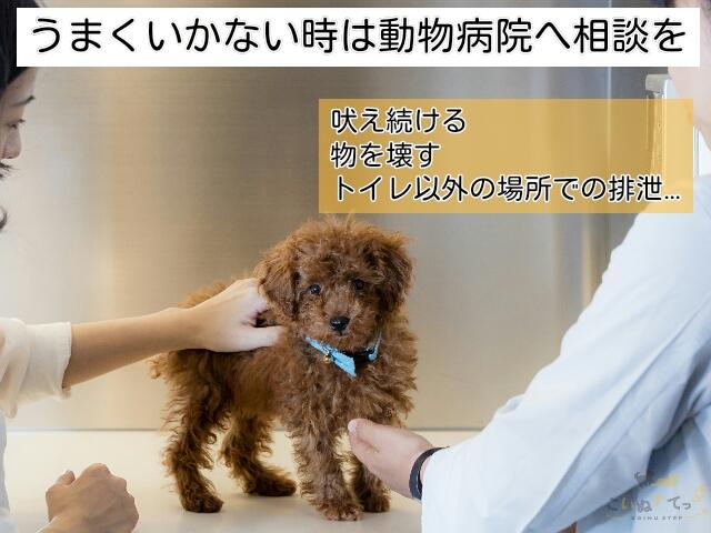 留守番のしつけがうまくいかず困った行動をとる場合は動物病院へ