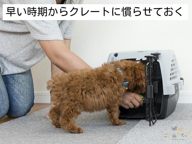 犬の留守番にクレートトレーニングは必須