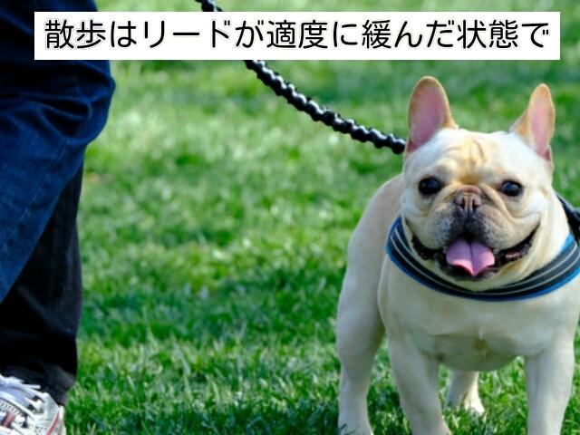 引っ張ることなく、リードが緩んだ状態でゆったり犬と歩く散歩が理想的