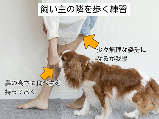 飼い主の隣について歩く練習