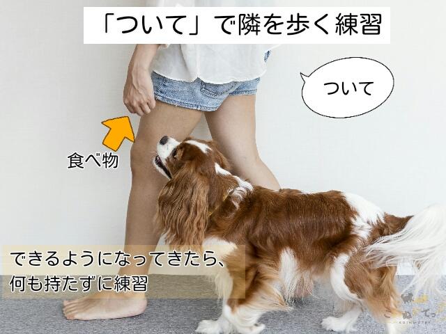 「ついて」と言いながら飼い主の隣を散歩する練習をする犬