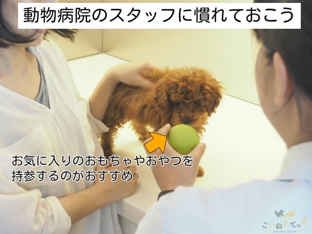 子犬が動物病院のスタッフに慣れておくことも大切