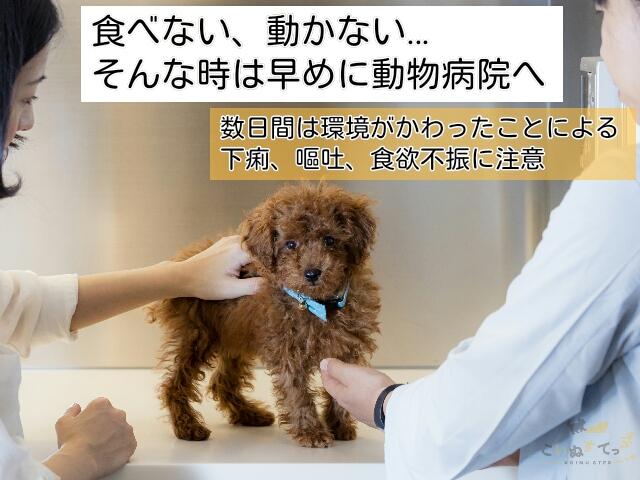 子犬が全く食事をとらないならば早めに動物病院を受診する
