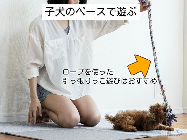 子犬の体力と性格にあわせて遊んであげる