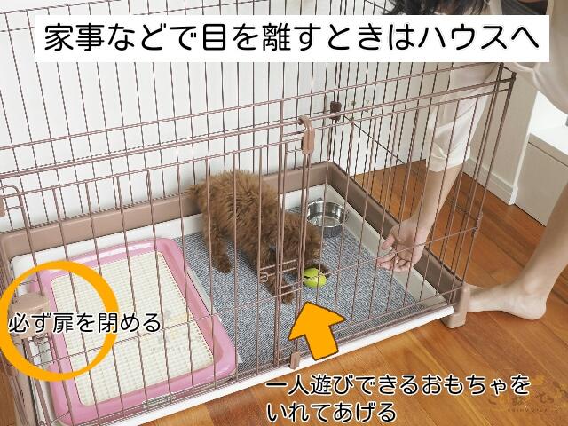 子犬から目を離すときは必ずハウスへ入れて扉を閉める