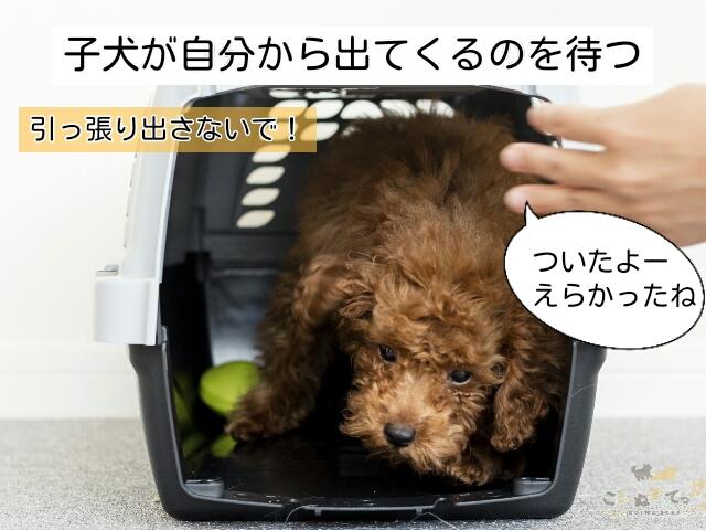 子犬と自宅についたら、まずは子犬が自分から出てくるのを待つ