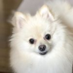 愛犬の命を守る熱中症対策。室内編【獣医師監修】
