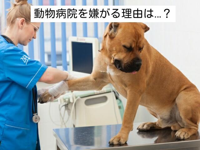 愛犬が動物病院を嫌がる理由を知っていますか