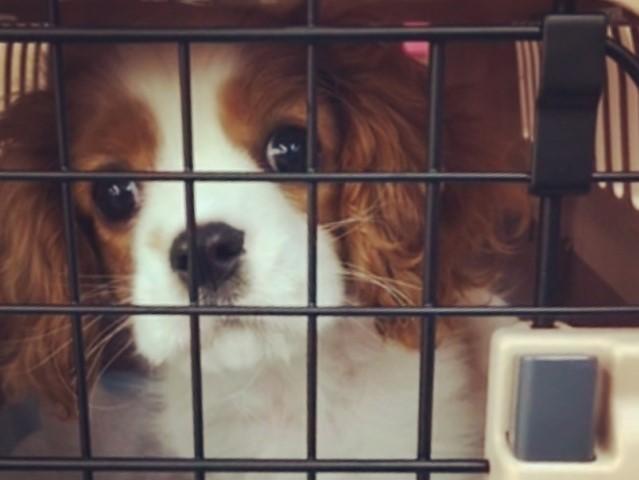 しっかり熱中症対策をして車に乗る犬