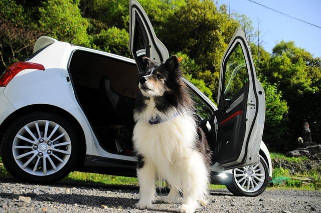 熱中症対策をしてドライブを楽しむ犬