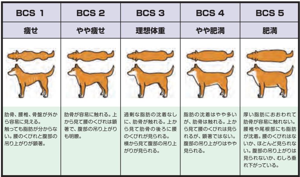 犬の肥満を判定するボディコンディションスコア