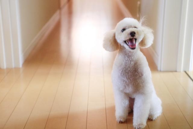 マイクロチップは努力義務となる犬