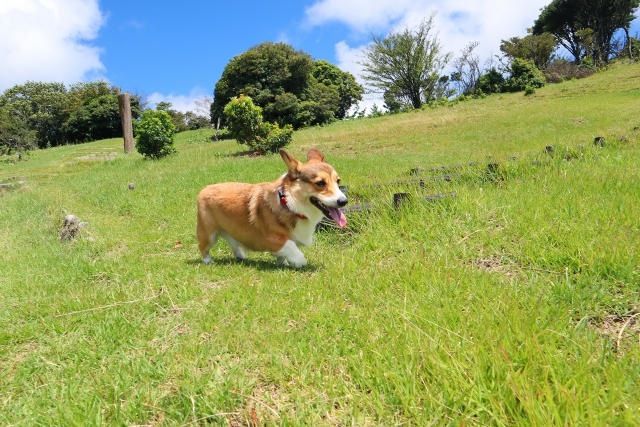 犬のダイエットを安全にするための無理のない運動