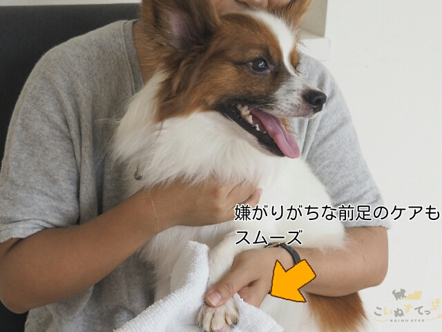 お手のしつけをしておくことで、ケアが楽になっている犬