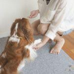 【犬のしつけ】「お手」は本当に必要なの?