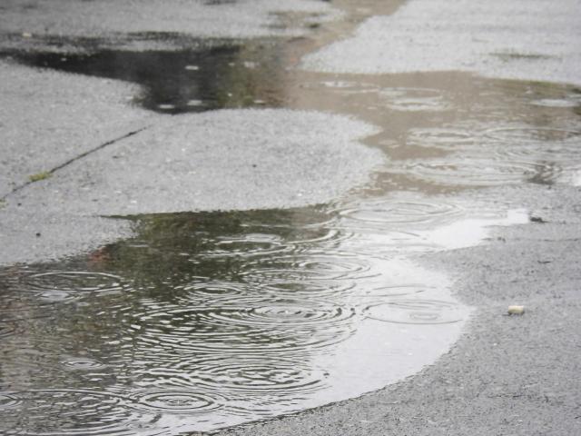 愛犬との散歩が楽しい雨の道