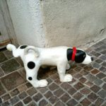 ついやってない?犬との散歩、NGマナー6つ!
