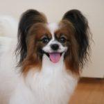 【愛犬がうんちを食べた】やりがちなNG行動と必要な食糞対策
