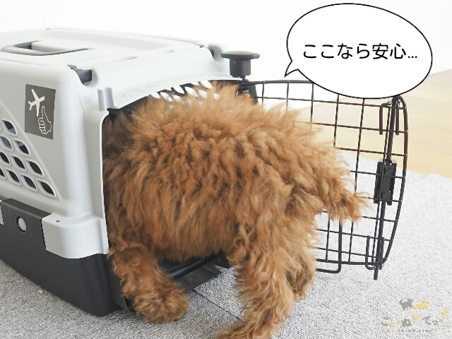 雷がこわくてクレートに避難する犬