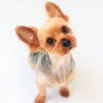 【梅雨は耳トラブル多発!】犬が耳掃除を嫌がる3つの理由と克服方法