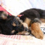 靴下、本、メガネ…愛犬がくわえてるのを発見!その時どうする?