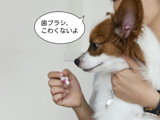 歯ブラシに対する印象をよくしている子犬