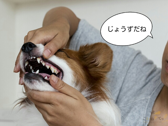 歯磨きの練習のために唇をめくる練習をしている子犬