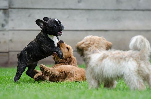 習性に従って遊ぶ子犬