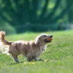 元気に長生きしてほしい!愛犬の長生きの秘訣5つ