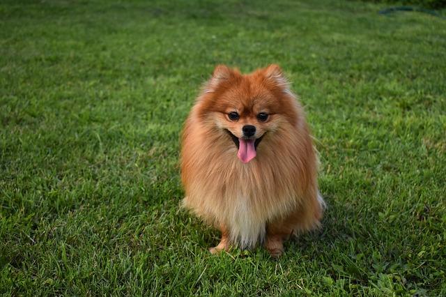 熱中症になりやすい北方原産の犬