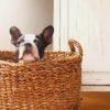 熱中症。うちの子もなりやすい?特に気を付けたい犬の特徴6つ