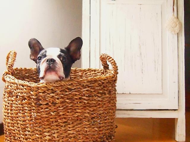 熱中症になりやすい犬