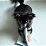 おうち時間を活用!犬のイタズラ対策。効果的なのに忘れがちな方法2つ