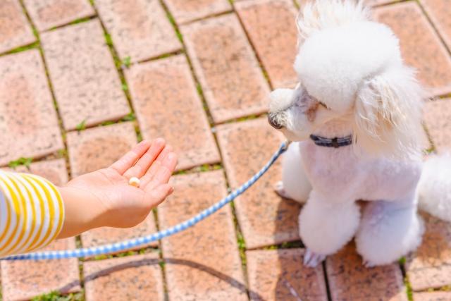 一粒のおやつをもらう犬