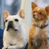 【厳重警戒】連日猛暑日!室内の愛犬の熱中症対策を見直そう!