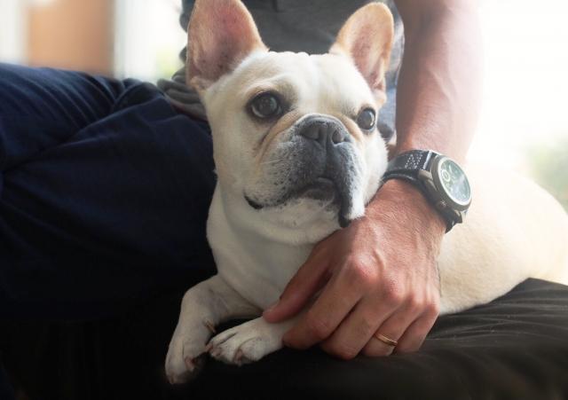 ペットホテルに預ける前の犬