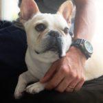 ペットホテル、予約したらすぐチェック!愛犬のためのtodoリスト