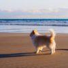 見られてますよ~!犬とのお泊り旅行NGマナー10連発