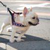 「こっち行くっ!」散歩でリードを引っ張る愛犬にオススメの練習4つ