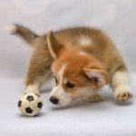 留守番中に愛犬を退屈させないために必ず実践したい2つのこと