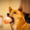 【台風の一日】怖がってしまう愛犬とどうやって過ごそう?