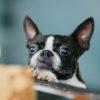 【危険!】こんなものまで…家庭内で犬が誤飲しがちなもの8選