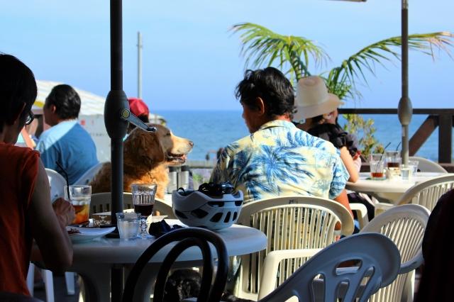 夏のカフェを楽しむ犬