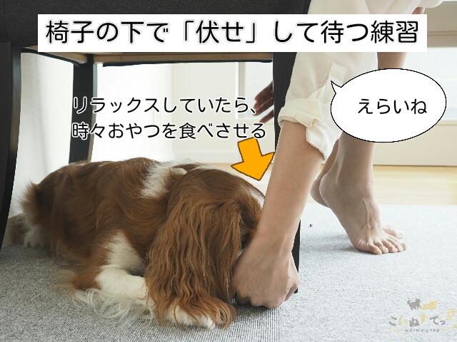 カフェでリラックスする練習をする犬