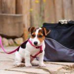 犬、車、ポスト?!家の外を楽しめる犬になるために慣れさせたいもの6選