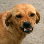 愛犬のごはん中に近づくとうなる、噛みつこうとする…解決方法は?
